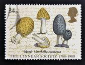 UNITED KINGDOM - CIRCA 1988: a stamp printed in Great Britain shows image of morel mushrooms (Morella esculenta) commemorates the 200th anniversary of the Linnean Society, circa 1988 — Stock Photo