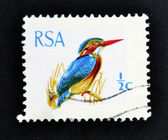 SOUTH AFRICA - CIRCA 1969: A stamp printed in South Africa (RSA) shows African Pygmy Kingfisher - Ispidina picta, circa 1969 — Stock Photo