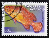 SOUTH AFRICA - CIRCA 2000: A stamp printed in RSA shows Coral Rockcod, Cephalopholis miniata, circa 2000 — Stock Photo