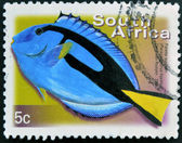 SOUTH AFRICA - CIRCA 2000: A stamp printed in RSA shows palette surgeon, Paracanthurus hepatus, circa 2000 — Stock Photo