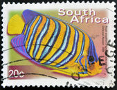 SOUTH AFRICA - CIRCA 2000: A stamp printed in RSA shows royal angelfish, Pygoplites Diacanthus, circa 2000 — Stock Photo