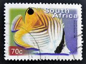 SOUTH AFRICA - CIRCA 2000: A stamp printed in RSA shows threadfin butterflyfish, Chaetodon auriga, circa 2000 — Stock Photo