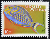 SOUTH AFRICA - CIRCA 2000: A stamp printed in RSA shows bluebanded surgeon, Acanthurus lineatus, circa 2000 — Stock Photo