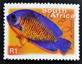 SOUTH AFRICA - CIRCA 2000: A stamp printed in RSA shows coral beauty, centropyge bispinosus, circa 2000 — Stock Photo