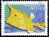 SOUTH AFRICA - CIRCA 2000: A stamp printed in RSA shows longhorn cowfish, Lactoria cornuta, circa 2000 — Stock Photo