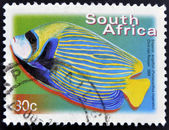 SOUTH AFRICA - CIRCA 2000: A stamp printed in RSA shows emperor angelfish, Pomacanthus imperator, circa 2000 — Stock Photo