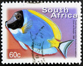 SOUTH AFRICA - CIRCA 2000: A stamp printed in RSA shows powder blue surgeonfish, Acanthurus leucosternon, circa 2000 — Stock Photo