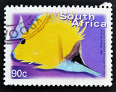 SOUTH AFRICA - CIRCA 2000: A stamp printed in RSA shows Longnose Butterflyfish, Forcipiger flavissimus, circa 2000 — Stock Photo