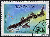 TANZANIA - CIRCA 1993: A stamp printed in Tanzania shows Caribbean lanternshark, Etmopterus hillianus, circa 1993 — Stock Photo