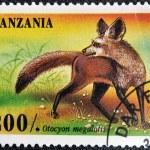 TANZANIA - CIRCA 1995: A stamp printed in Tanzania shows Bat Eared Fox, Otocyon megalotis, circa 1995 — Stock Photo #17660091