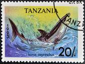 TANZANIA - CIRCA 1993: A stamp printed in Tanzania shows shortfin mako shark, Isurus oxyrinchus, circa 1993 — Stock Photo