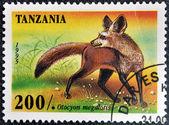 TANZANIA - CIRCA 1995: A stamp printed in Tanzania shows Bat Eared Fox, Otocyon megalotis, circa 1995 — Stock Photo