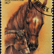 Stock Photo: KYRGYZSTAN - CIRC1995: stamp printed in Kyrgyzstshows horse with filly, circ1995