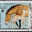 POLAND - CIRCA 1978: A stamp printed in Poland and shows horse with a baby, circa 1978 — Stock Photo