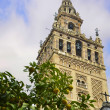 The Giralda of Seville and orange — Stock Photo