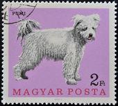 венгрия - около 1975: штамп напечатан в венгрии шоу собака, пуми, около 1975 — Стоковое фото