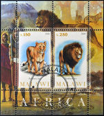 MALAWI - CIRCA 2010: Stamps printed in Malawi shows lion and lioness, circa 2010 — Stock Photo