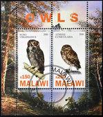Malawi - intorno al 2010: francobolli stampati in malawi dedicato ai gufi, intorno al 2010 — Foto Stock