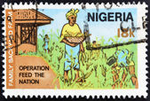 NIGERIA - CIRCA 1970: Stamp printed in nigeria dedicated to operation feed the nation shows family backyard farm, circa 1970 — Stock Photo