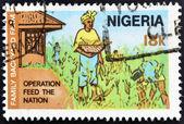 Nijerya - 1970 circa: ulus besleme çalışması için adanmış Nijerya'da basılmış pul gösterir 1970 circa aile arka bahçe çiftliği — Stok fotoğraf
