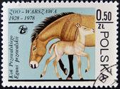 POLAND - CIRCA 1978: A stamp printed in Poland and shows horse with a baby, circa 1978 — Stock Photo