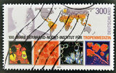 GERMANY - CIRCA 2000: A stamp printed in Germany dedicated to Bernhard Nocht Institute for Tropical Medicine, circa 2000 — 图库照片