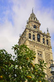 The Giralda of Seville and orange — Стоковое фото