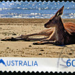 AUSTRALIA - CIRCA 2011: A stamp printed ibn Australia shows Kangaroo on the beach, circa 2011 — Stock Photo
