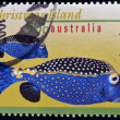 Royalty-Free Stock Photo: AUSTRALIA - CIRCA 1996: A stamp printed in Australia shows an image of Spotted boxfish, christmas island, circa 1996