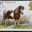Royalty-Free Stock Photo: UNITED KINGDOM - CIRCA 1978: stamp printed in Great Britain shows a Sheltand pony, circa 1978