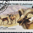 UZBEKISTAN - CIRCA 1996: A stamp printed in Uzbekistan shows ovis ammon cycloveros, circa 1996 — Stock Photo