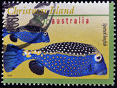 AUSTRALIA - CIRCA 1996: A stamp printed in Australia shows an image of Spotted boxfish, christmas island, circa 1996 — Stock Photo