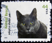 UNITED STATES OF AMERICA - CIRCA 2010: A stamp printed in USA dedicated to animal rescue, adopt a shelter pet, shows a cat, circa 2010 — Stock Photo