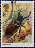 UNITED KINGDOM - CIRCA 2012: A stamp printed in Great Britain shows Lucanus cervus (stag beetle), circa 2012 — Stock Photo