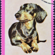 RAS AL-KHAIMAH - CIRCA 1971: A stamp printed in Ras al-Khaimah shows a dog, circa 1971 — Stock Photo #19887623
