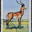 BURUNDI - CIRCA 1964: stamp printed in Kingdom of Burundi shows an African animal - Buffalo, circa 1964 — Stock Photo