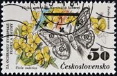 CZECHOSLOVAKIA - CIRCA 1983: A Stamp printed in Czechoslovakia shows image of a eudia pavonia and viola sudetica, circa 1983 — Photo