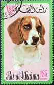 RAS AL-KHAIMAH - CIRCA 1971: A stamp printed in Ras al-Khaimah shows a dog, circa 1971 — ストック写真