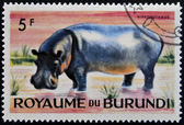 BURUNDI - CIRCA 1964: stamp printed in Kingdom of Burundi shows an African animal - Hippopotamus, circa 1964 — Stock Photo