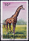 BURUNDI - CIRCA 1964: stamp printed in Kingdom of Burundi shows an African animal - Giraffe, circa 1964 — Foto Stock