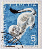 SWITZERLAND - CIRCA 1966: a stamp printed in Switzerland shows Ermine, Mustela Erminea, short-tailed Weasel, circa 1966 — Stock Photo