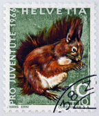 SWITZERLAND - CIRCA 1966: a stamp printed in Switzerland shows Red Squirrel, Sciurus Vulgaris, circa 1966 — Stock Photo