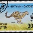 BATUMI - CIRCA 1994: A stamp printed in Batumi shows cheetah, circa 1994 - Stockfoto