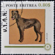 ストック写真: ERITRE- CIRC1984: stamp printed in Eritreshows dog, lurcher, circ1984