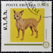 ERITREA - CIRCA 1984: A stamp printed in Eritrea shows a dog, chihuahua, circa 1984 — Stock Photo