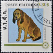 ERITREA - CIRCA 1984: A stamp printed in Eritrea shows a dog, bloodhound, circa 1984 - Stock Photo