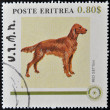 ERITREA - CIRCA 1984: A stamp printed in Eritrea shows a dog, red setteh, circa 1984 — Stock Photo