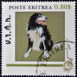Foto Stock: ERITRE- CIRC1984: stamp printed in Eritreshows dog, bordier collie, circ1984