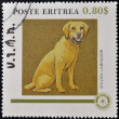 ERITREA - CIRCA 1984: A stamp printed in Eritrea shows a dog, golden labrador, circa 1984 — Stock Photo