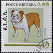 ERITREA - CIRCA 1984: A stamp printed in Eritrea shows a dog, the bulldog, circa 1984 — Stock Photo